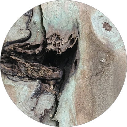kwast geïmpregneerd hout